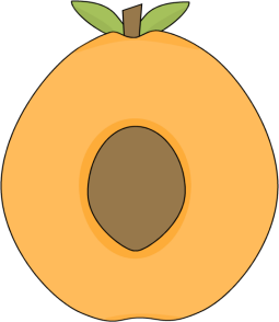Apricot Center