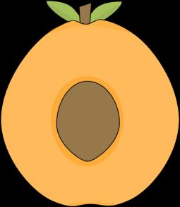 Apricot Center