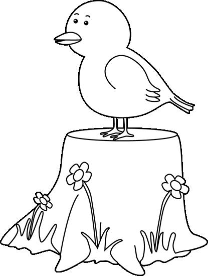 Black and White Bird on a Tree Stump