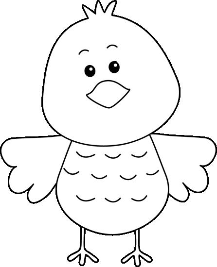 Cute Black and White Bird