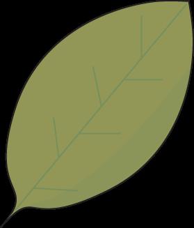 Green Autumn Leaf