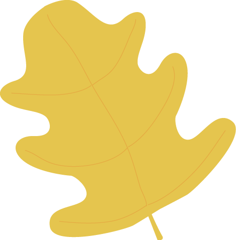 Yellow Oak Autumn Leaf