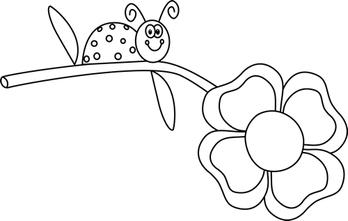 Black and White Ladybug on a Flower