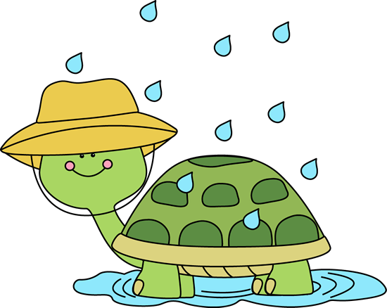 Turtle Standing in a Rain Puddle