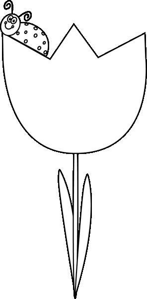 Black and White Ladybug on a Tulip